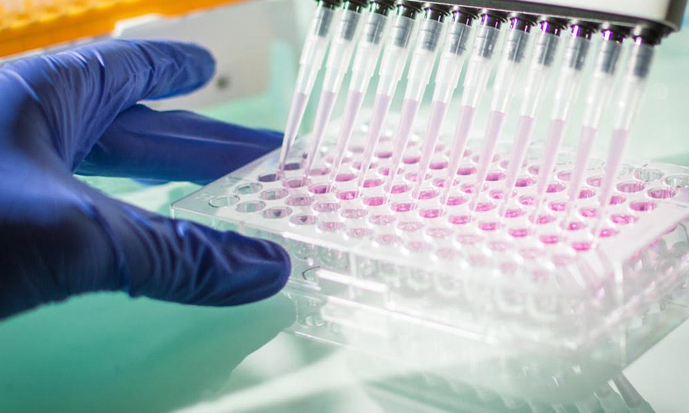 Peter Duchek Stammzellforschung