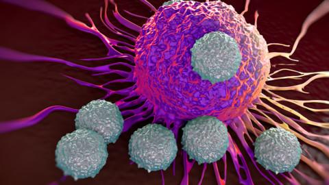 Medizin-Nobelpreis: Das Immunsystem ankurbeln